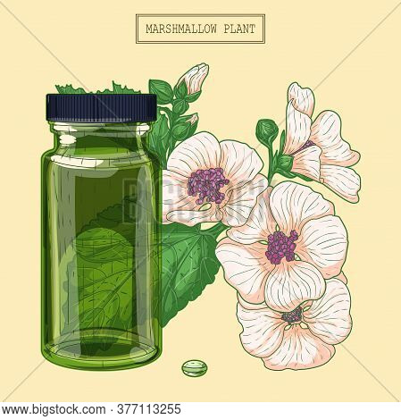 Medicinal Marshmallow Flowers And Green Glass Vial, Hand Drawn Botanical Illustration In A Trendy Mo