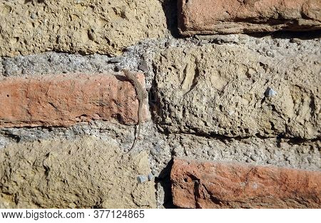 Lizard On The Wall With An Old Masonry Of Red Brick And Yellow Sandstone