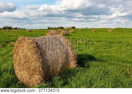 Haystack. Hay Bale On Green Lush Grass Against A Blue Sky. Harvesting Hay, Dry Grass. Livestock Feed