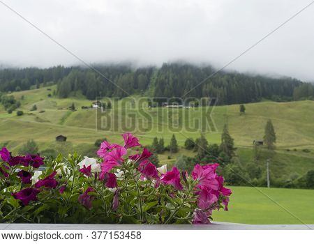 Beautiful Potted Pink And White Geranium Flowers On A Balcony Overlooking A Valley In Neustift Im St
