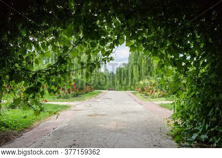 Alley In Park Paved Under The Living Arch Formed With Climbing Plants. View From Under The Arch On A