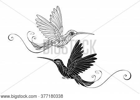 Two Contour Birds Hummingbirds Black And White On A Transparent Background