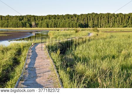 Winding Wooden Footpath Through A Wetland In The Swedish Nature Reserve Beijershamn On The Island Ol