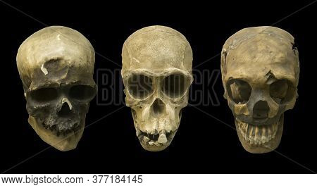 Collection Of Fossil Human Skull On Black Isolated Background