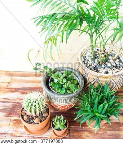 Succulent Plant And Palm Tree In A Terracotta Pot. Natural Light. Plant Home Decoration