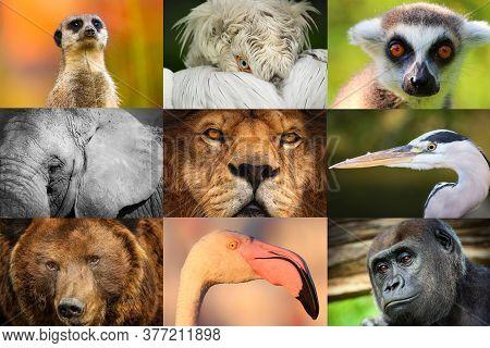 Collage Of Animal Portraits- Lion, Elephant, Monkey, Bear, Flamingo, Gorilla,pelican, Lemur And Meer