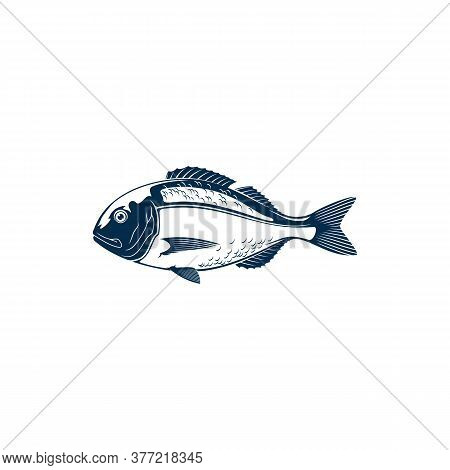 Gilt Head Bream Isolated Sparus Aurata Saltwater Fish. Vector Orata Or Dorada Fish Of Bream Family S