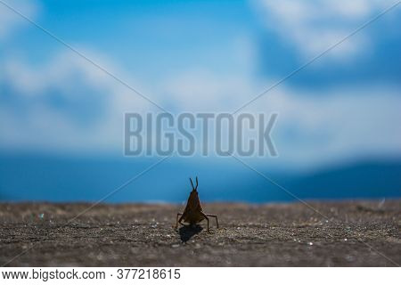 insect silhouette and blue sky. Dragonfly is an insect belonging to the order Odonata, infraorder An