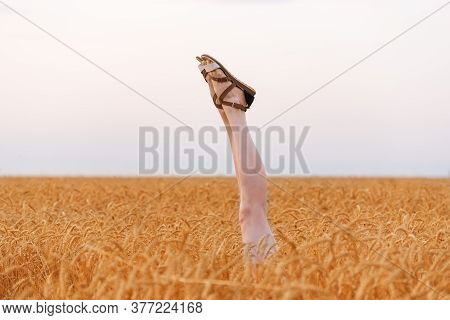 Feet In Sandals Funny Sticking Out Of Wheat Field. Legs Upwards Against Sky