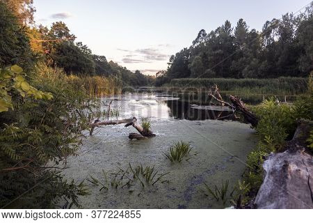 River Floodplain With Old Snags, Duckweed And Reeds. Untouched Nature And Sunset On The Dnieper (dni