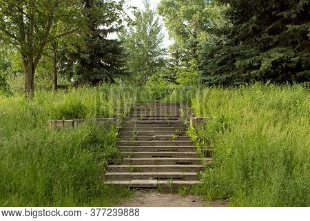Old Steps Overgrown With Grass. Unkempt Summer Abandoned City Park.