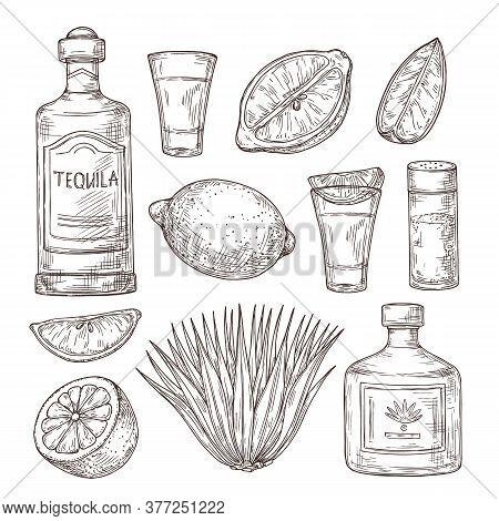 Agave Tequila Sketch. Vintage Glass Shot, Bar Ingredients And Plant. Isolated Drawing Alcohol Bottle