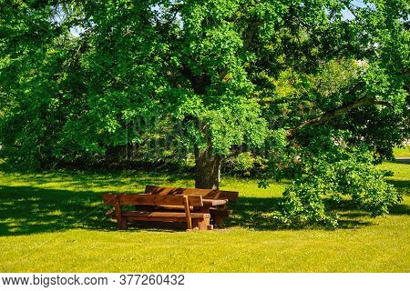 Benches And Table Under The Big Oak Tree On The Green Lawn