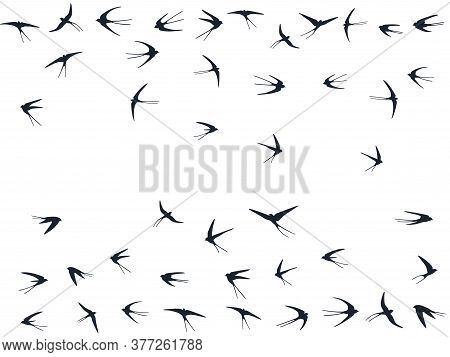 Flying Martlet Birds Silhouettes Vector Illustration. Migratory Martlets Bevy Isolated On White. Ala