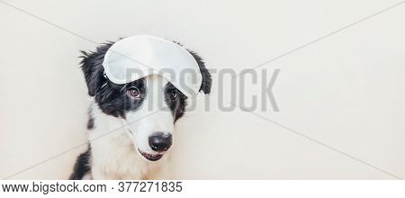 Do Not Disturb Me Let Me Sleep. Funny Puppy Dog Border Collie With Sleeping Eye Mask Isolated On Whi