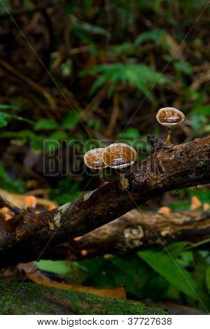 Mushroom In Nature.
