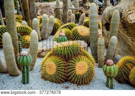 Collection Beautiful Prickly Cacti In The Greenhouse