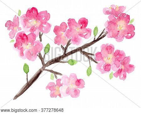 Bright Watercolor Sakura Branch With Pink Flowers And Small Green Leaves. Hand Drawn Watercolour Che