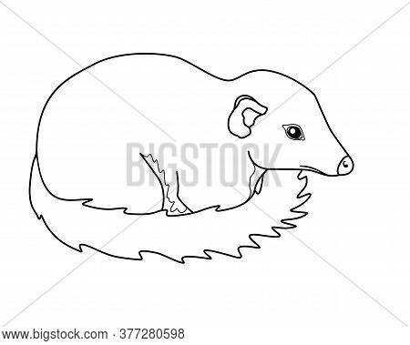 Tupaia - Small Primate - Vector Linear Picture For Coloring. Asian Animal - Tupaia Common - Coloring