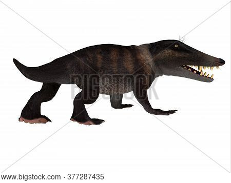 Ambulocetus Walking Whale 3d Illustration - Ambulocetus Was The Primitive Otter-like Ancestor Of The