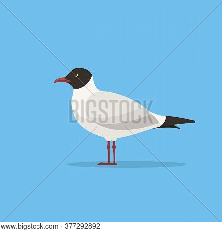 Mediterranean Gull. Seagull Vector Illustration. Flat Style Gull Bird.