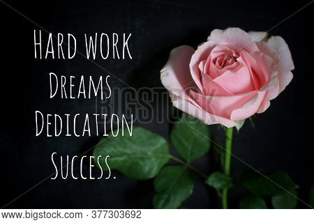Inspirational Motivational Quote - Hard Work, Dreams, Dedication, Success. With Pink Single Rose Flo