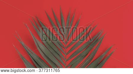 A Simple Palm Tree Leaf Flat Lay Isolated Against The Colorful Background, Trendy Fashion Design