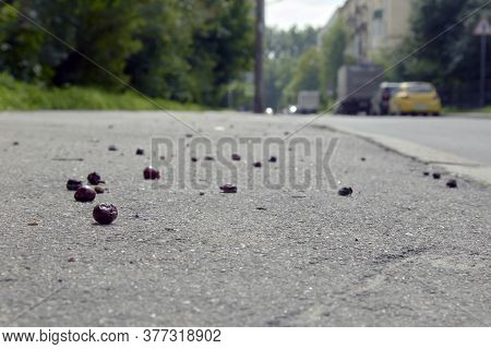 A Cherry Fruit That Fell On The Pavement