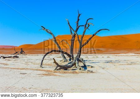 Orange dunes, dead trees and ringing silence. Clay plateau in the Namib Naukluft desert. Namibia. The bottom of the dead dried lake Sussussflay. The concept of extreme, exotic and photo tourism
