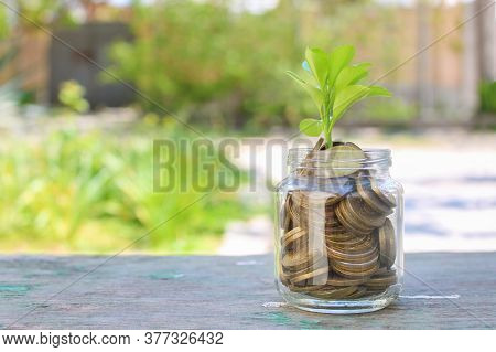 Coins In Glass Jar And Growing Tree. Concept Of Profitable Cash Investments.