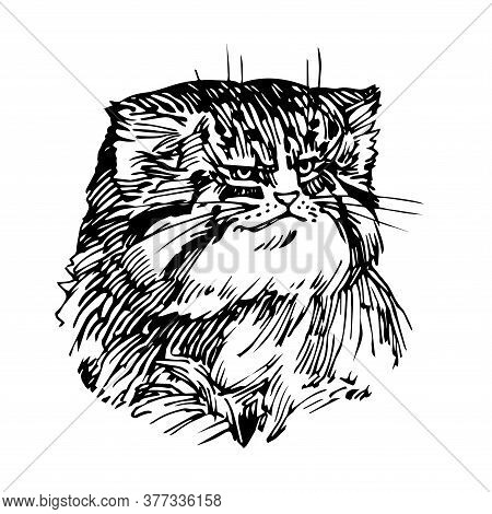 Portrait Of A Manul Cat, A Wild Rare Asian Animal, For A Logo Or Emblem, Vector Illustration With Bl