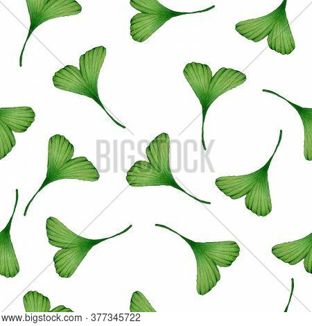 Ginkgo Biloba Seamless Background, Watercolor Hand Painted Illustration With Ginkgo Leaves For Wrapp