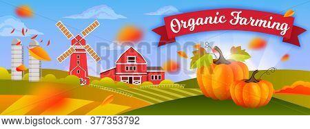 Organic Farm Harvest Background With Pumpkin, Mill, Barn, Hills, Fields, Autumn Leaves. Rural Farmin