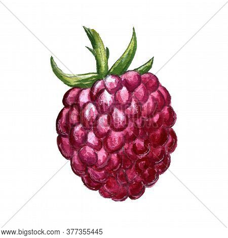 Hand Drawn Illustration Of Raspberry. Berry Drawing Isolated On White Background. Organic Fruit Grow