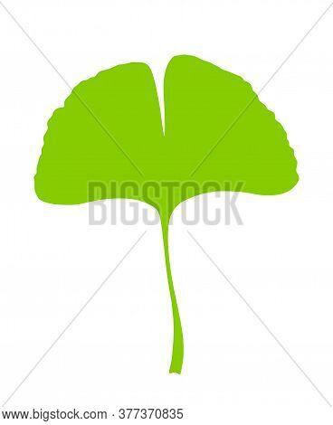Green Ginkgo Or Gingko Biloba Leaf. Nature Botanical Vector Silhouette Illustration, Herbal Medicine
