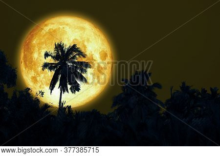 Full Sturgeon Moon And Silhouette Coconut Tree In The Dark Night Sky