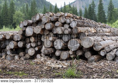 Old Pine Logs, Lying In A Wooded Area Near The Village