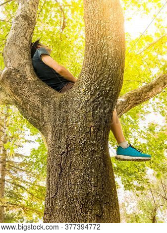 Casual Man Wearing Hat Resting On The Tree Branch In A Park On A Hot Summer Day. Peaceful Mind Conce
