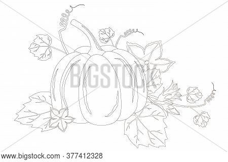 Nice Ripe Pumpkin And Flowers Coloring Book Page Isolated On A White Background. Vector Pumpkin Illu