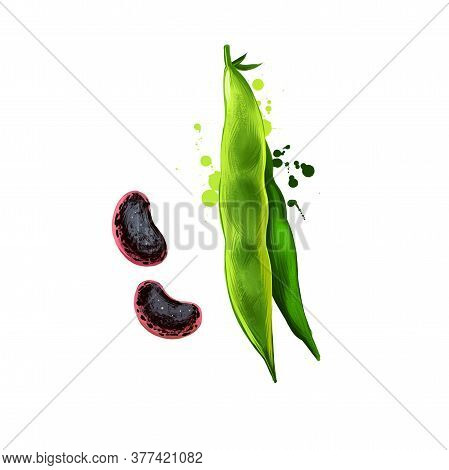 Runner Beans Isolated On White. Phaseolus Coccineus, Known As Scarletr Bean Or Multiflora Bean Plant