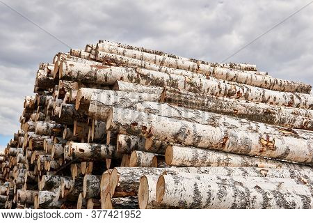 Pile Of Birch Logs Against The Sky In A Timber Industry