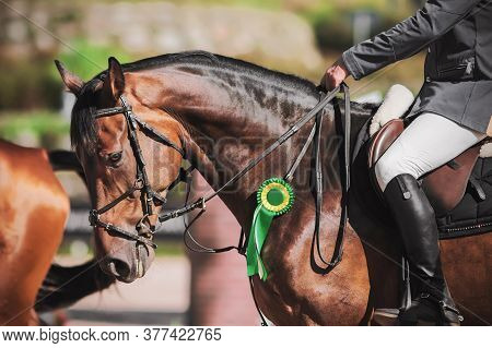 A Beautiful Bay Racehorse With A Rider In The Saddle Was Awarded A Green Rosette For Participating I