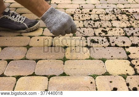 Man Cleans The Street Tile From The Moss. Restoring Order In The Garden, Pulling Moss And Dirty From