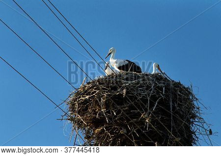 Stork Returning To Their Nests In The Spring Months, The Storks Nest, The Two Storks,