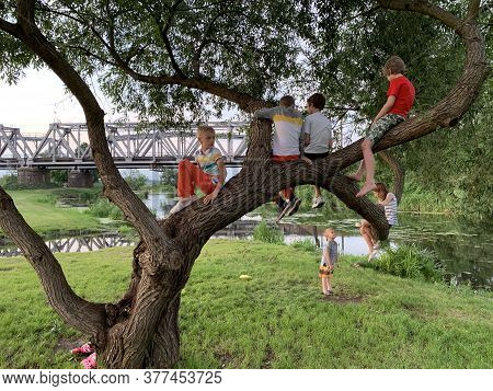 Children Sit On An Old Tree Near The River. Many Children Play On The Branches Of The Tree. Boys And