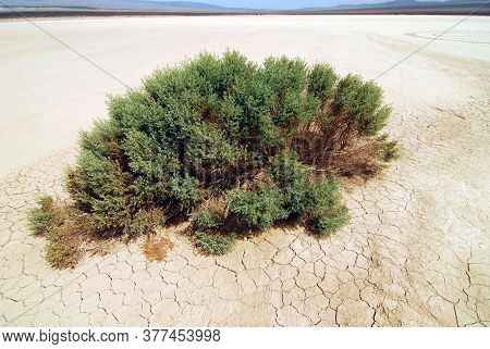 Dried Out Soil In Heat And Dryness In Summer Time And Green Bush
