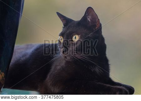 Portrait Of A Black Cat Laying On A Table Beside A Vase.
