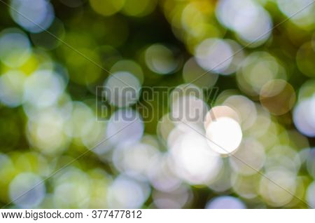 Abstract Natural Green Bokeh Background, Blurred And Defocused, Green Leaves Bokeh Out Of Focus Back