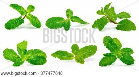 Set Fresh Raw Mint Leaves Isolated On The White Background.
