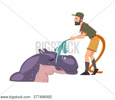 Male Zoo Worker Washing Hippo With Shower, Veterinarian Or Professional Zookeeper Character Caring O